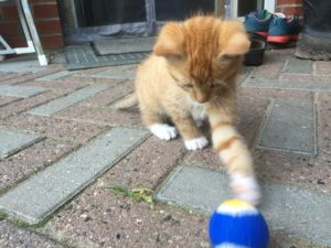kattekillingbold